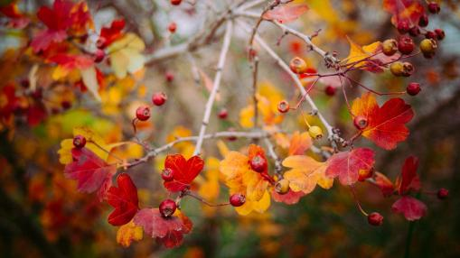 Autumn Wedding Colour Schemes